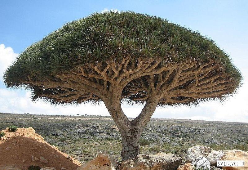 Сокотра - райский остров в окружении сомалийский пиратов