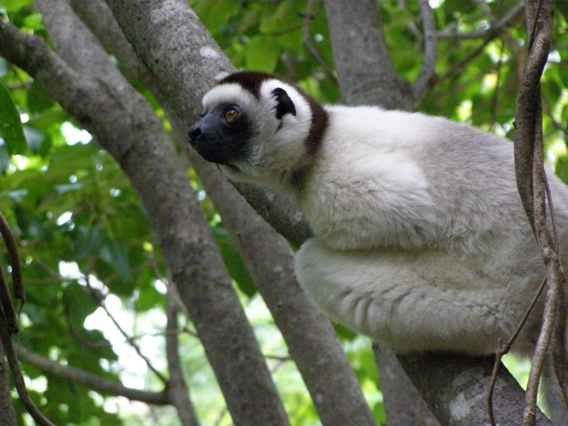 Андрей Королев: Мадагаскар или путешествие в прошлое. 15.03