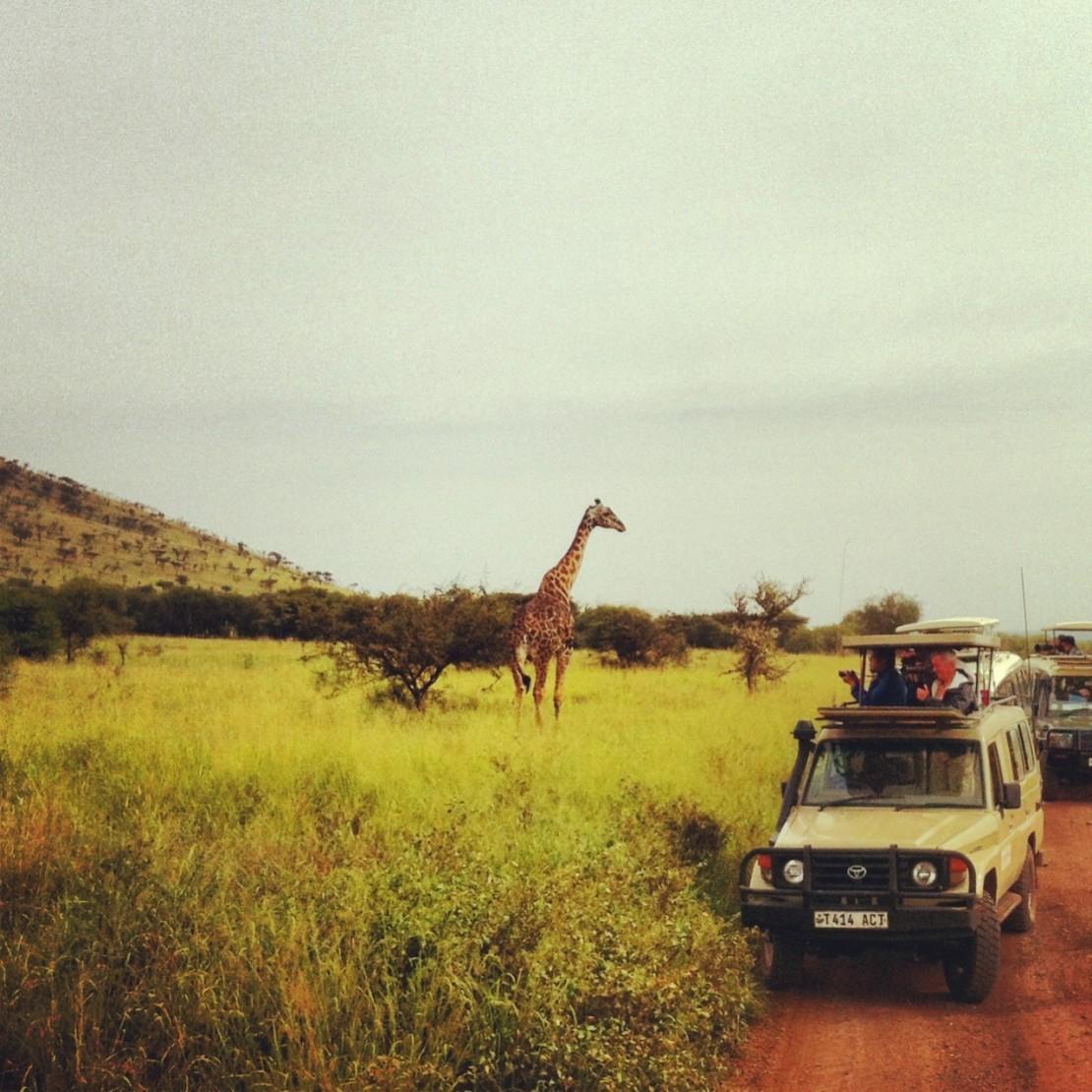 Организация сафари в Танзании