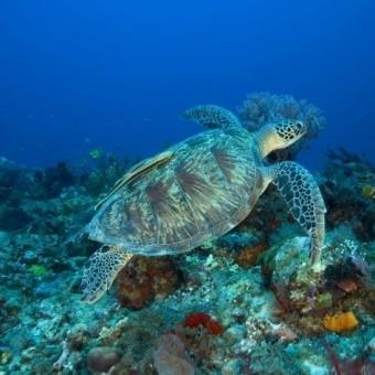 Дайвинг на островах Гили. Как бесплатно поплавать с черепахами