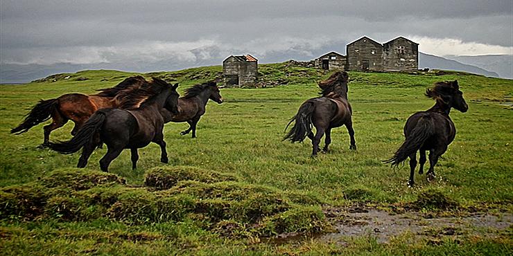 Фермы Исландии