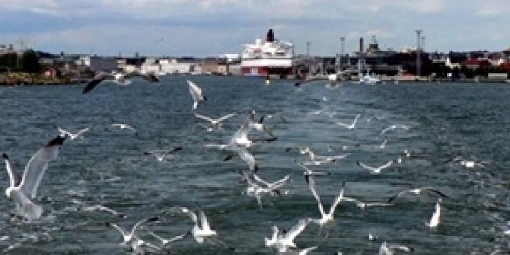 Заплыв от Петербурга до Хельсинки или путешествие по северным морям