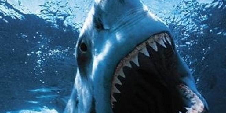 Нападения акул в Египте продолжаются