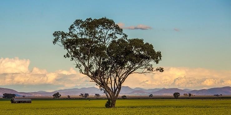Австралия: страна head over heels