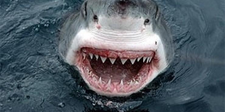Пьяный серб задавил акулу