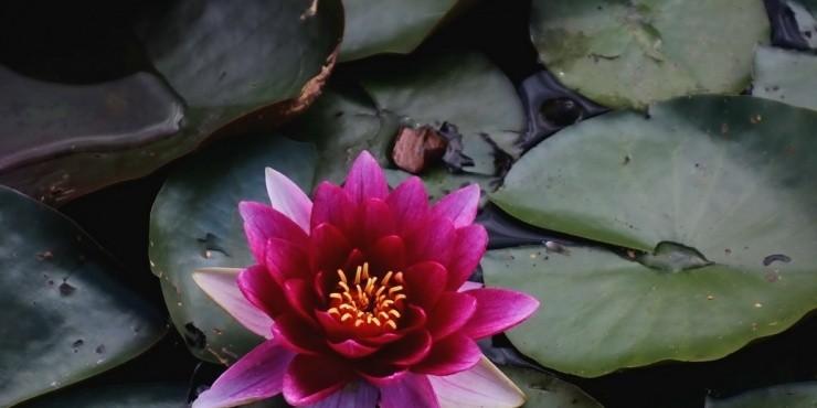 Лен и пчелы, крыши и водяные лилии