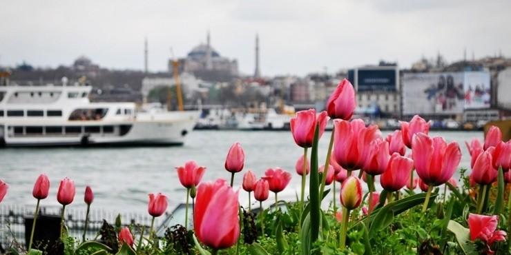 В поисках счастья: Фестиваль тюльпанов в Стамбуле