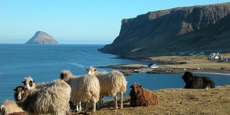 5 вещей, которые нужно попробовать на Фарерских островах