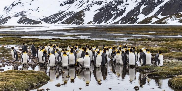 Южная Джорджия. Пингвиний рай