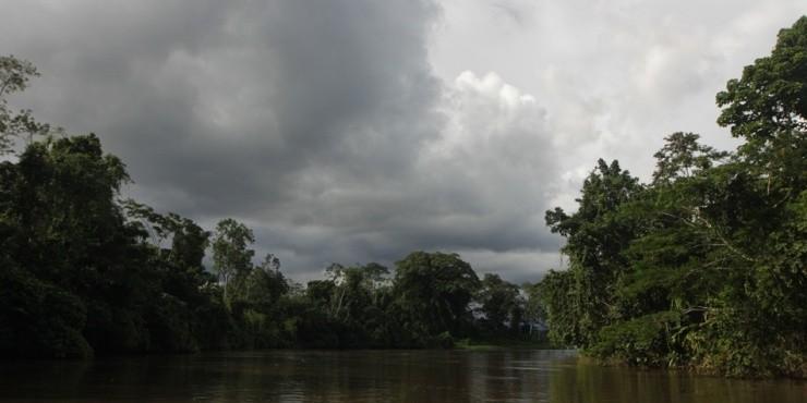 Джунгли Эквадора.