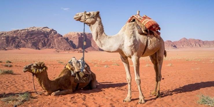 10 вещей, которые нужно сделать в Иордании