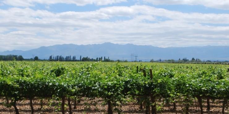 Часть 3: Зеленые виноградники и заснеженные пики Мендосы