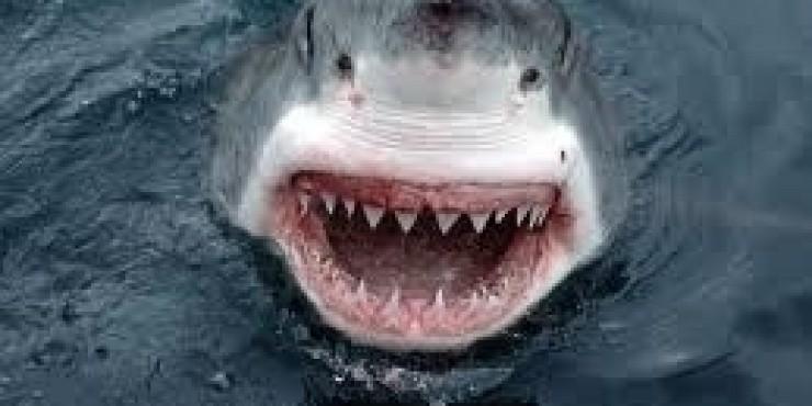 Египетская акула не поймана