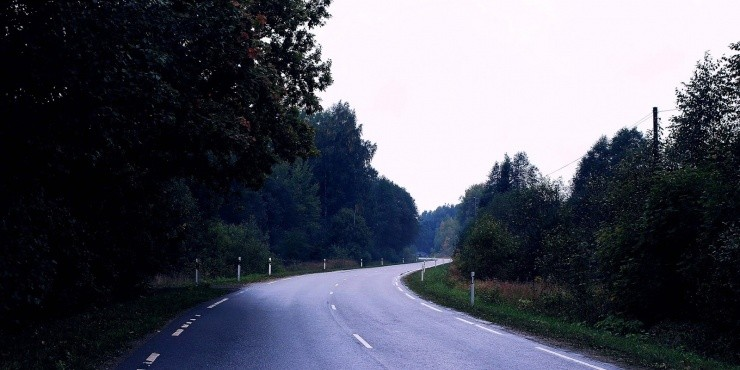 Тишина латвийского леса