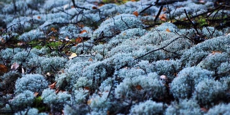 Гремучие леса и вкусное мороженое. Это все про Латвию
