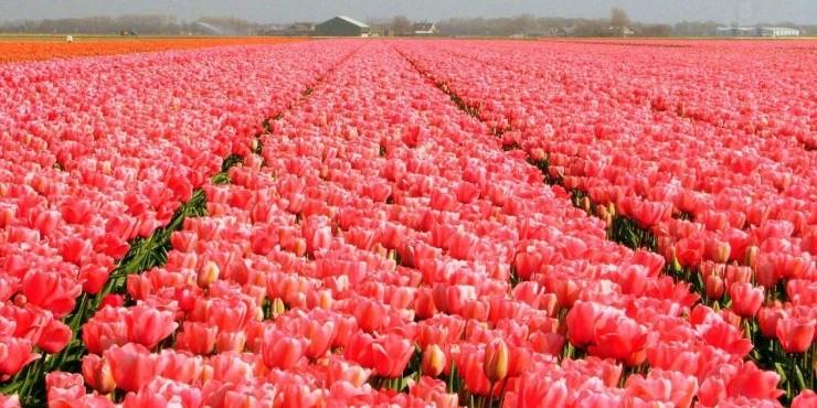 Нидерланды. Архив
